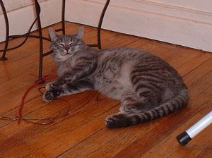 Pour ceux qui s'y connaissent en chat --> SOS :-/ - Page 2 DSCF0068